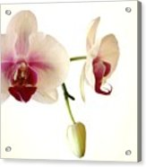 Summer Orchids Acrylic Print
