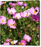 Summer Pink Acrylic Print
