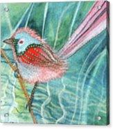 Summer Pond Daydreams Acrylic Print