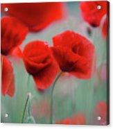 Summer Poppy Meadow 2 Acrylic Print