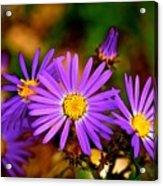 Summer Purple Acrylic Print