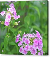 Summer Purple Flower Acrylic Print