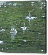 Summer Rain Acrylic Print