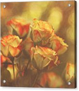 Summer Roses #1 Acrylic Print by Pat Abbott