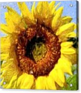 Summer Sunflower Acrylic Print