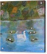 Summer Swan Acrylic Print