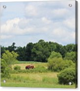Summer Tractor In Field Corinna Maine Acrylic Print