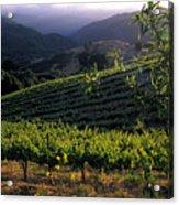 Summer Vineyard Acrylic Print