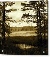 Summer Wetlands Acrylic Print