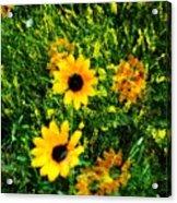 Summer Wildflower Dreams Acrylic Print