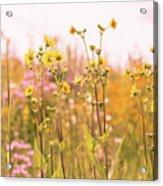 Summer Wildflower Field Of Sunflowers Acrylic Print