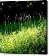 Summer Wind Acrylic Print