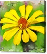 Summer Zinnia  Acrylic Print