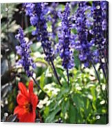 Summerflowers Acrylic Print