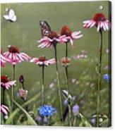 Summerlands Acrylic Print