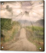 Summer's Last Light Acrylic Print