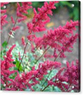 Summer's Offering Acrylic Print