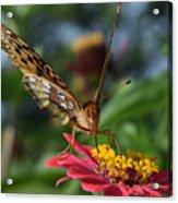 Summer's Sweet Nectar Acrylic Print