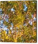 Summertime Tree Acrylic Print