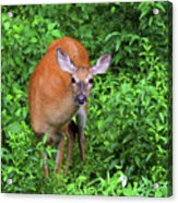 Summertime Visitor Acrylic Print