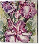 Sun And Iris Acrylic Print