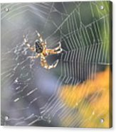 Spider On Web Acrylic Print