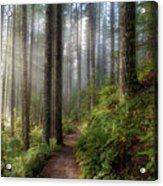 Sun Beams Along Hiking Trail In Washington State Park Acrylic Print