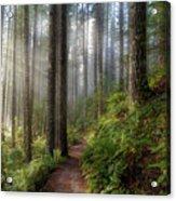 Sun Beams Along Hiking Trail In Washington State Park Acrylic Print