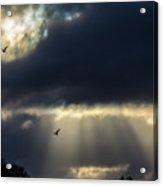 Sun Beams And Seagulls Acrylic Print