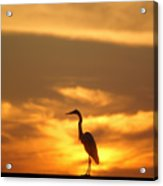 Sun Bird Acrylic Print