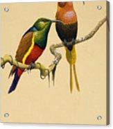 Sun Birds Acrylic Print