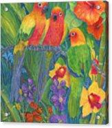 Sun Conure Parrots Acrylic Print