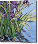 Sun Day - Iris In A Pond Acrylic Print