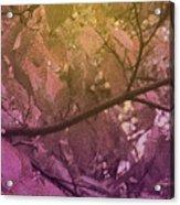 Sun Filter Acrylic Print