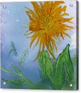 Sun Flower And Dragonflies  At Dusk Acrylic Print