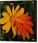 Sun Flower And Leaf Acrylic Print