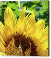 Sun Flower Floral Art Prints Sunflowers Summer Garden Acrylic Print