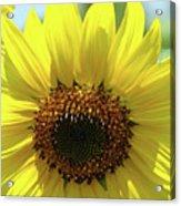 Sun Flower Glow Art Print Summer Sunflowers Baslee Troutman Acrylic Print