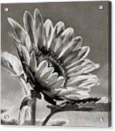 Sun Flower - Id 16235-142753-8673 Acrylic Print