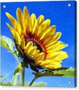 Sun Flower - Id 16235-142812-7136 Acrylic Print