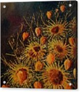 Sun Flowers And Physialis  Acrylic Print