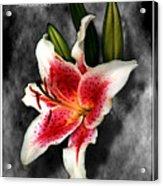 Sun Gazer Lily Poster Acrylic Print