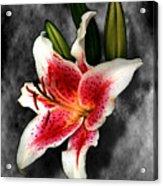 Sun Gazer Lily Acrylic Print