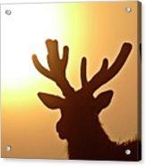Sun Glaring Over A Bull Elk Acrylic Print