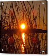 Sun In Reeds Acrylic Print