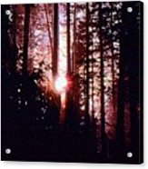 Sun In The Forest Two  Acrylic Print