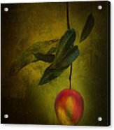 Sun-kissed Mango Acrylic Print