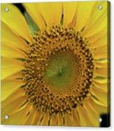 Sun Of Flowers Acrylic Print