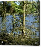 Sun Of The Loch Afternoon. Acrylic Print