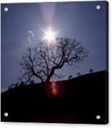 Sun On Tree Acrylic Print